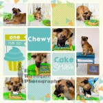 pet cake smash photography london ontario