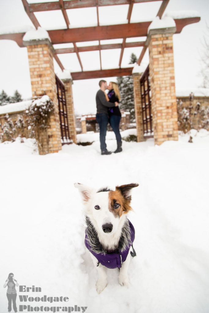 Winter Engagement Photography with Pets London Ontario